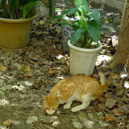 小黃貓與蜥蜴之戰-2