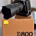 Welcome Home New Friend - Nikon D800