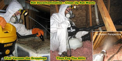 How To Get Rid Of Rats In House Building Attic Without   Home Design Idea