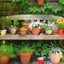 8 labores de mantenimiento para huertos urbanos en macetas