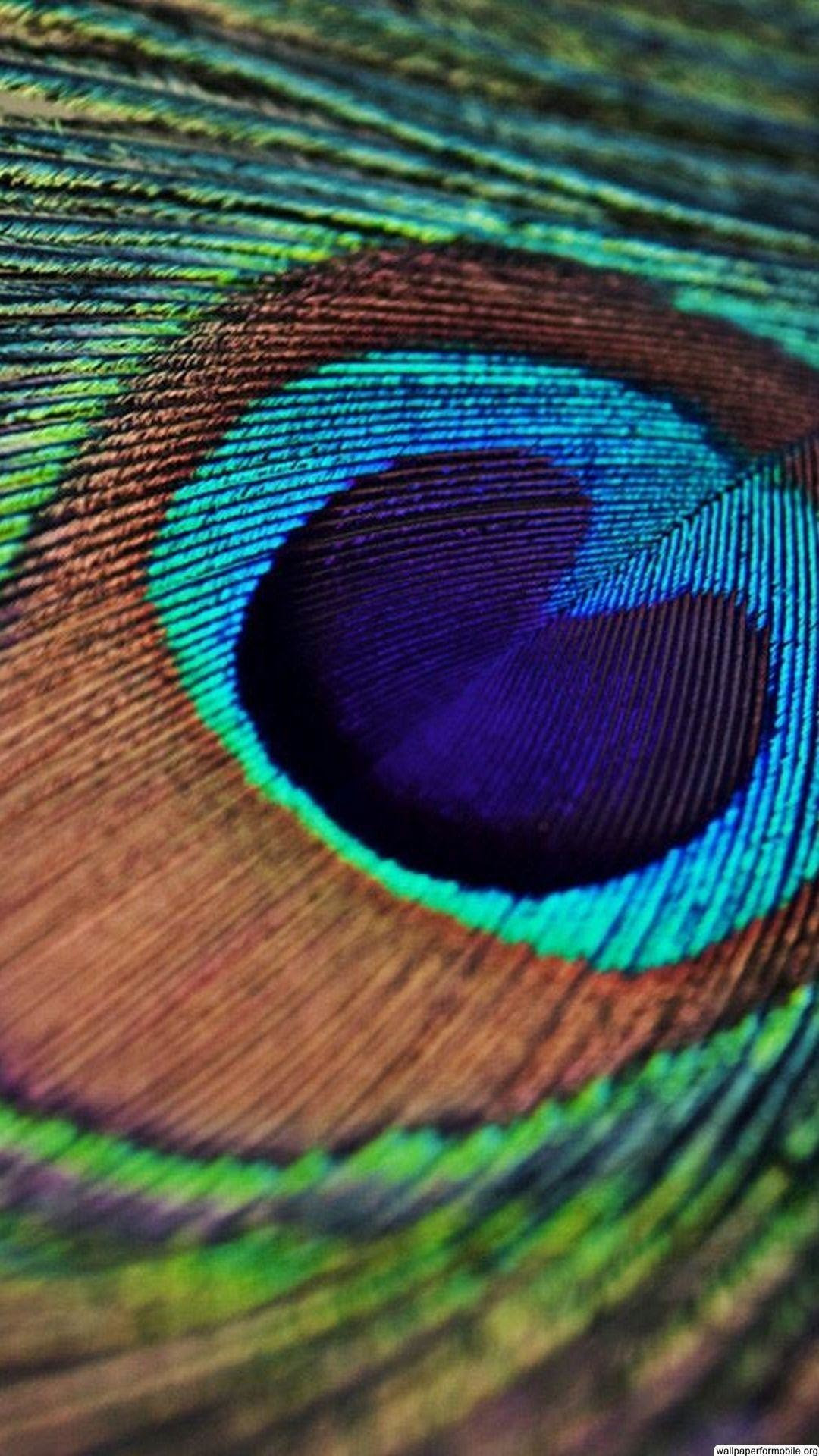 Peacock Feather Wallpaper (59+ images)
