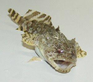 Weird Fish In Florida 6
