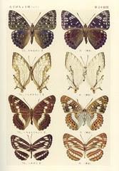 papillon 24