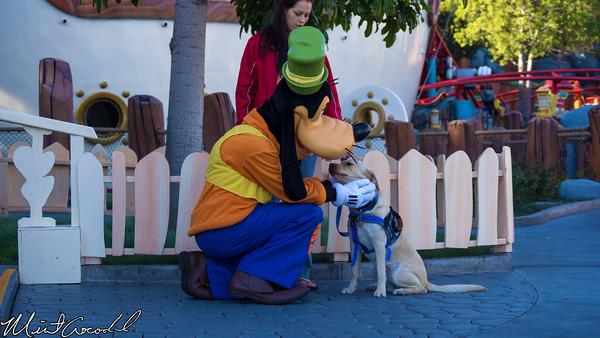 Disneyland Resort, Disneyland, Goofy, Seeing, Eye, Dog, Mickey's, Toon, Town, New, Costumes