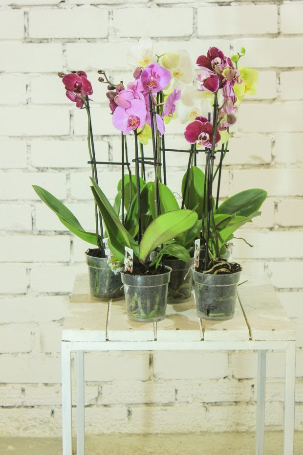 Toyin-Ann Yerifor Shares how to Create Green Space in Your Urban Home