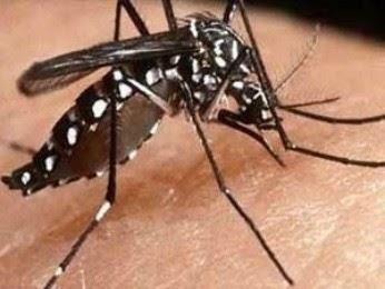 Primeira vacina contra a dengue combate três tipos virais da doença