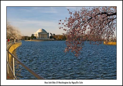003 Mùa Xuân Washington