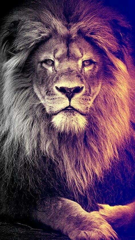 lion wallpaper ideas  pinterest lion