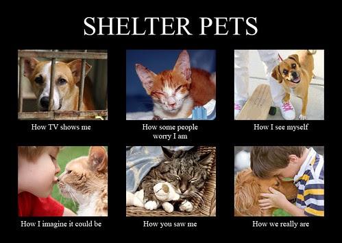 ShelterPets