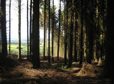 dark woodland  emma white geograph britain  ireland