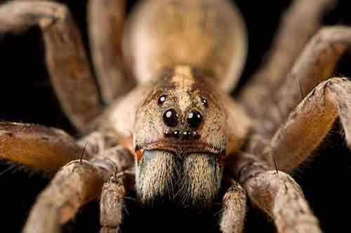 09-creepy-spiders-ngsversion-1477830620223-adapt-885-1