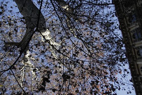 Torino tree