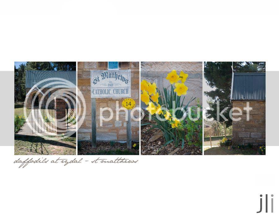 daffodils at rydal photo blog-4_zpsb7b20763.jpg