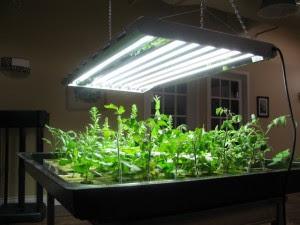 Best spices to grow under T5 lights T5 grow light fixtures