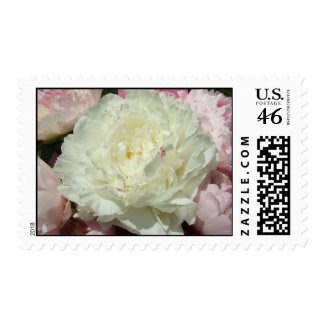 White Peonies / Peony Pink Wedding Postage Stamps stamp