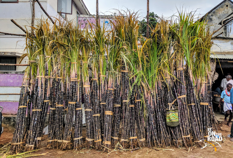 Sugarcane to celebrate Pongal - Kallidaikurichi market, Tamil Nadu
