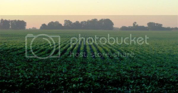 Soybean field, Buenos Aires Province, Argentina