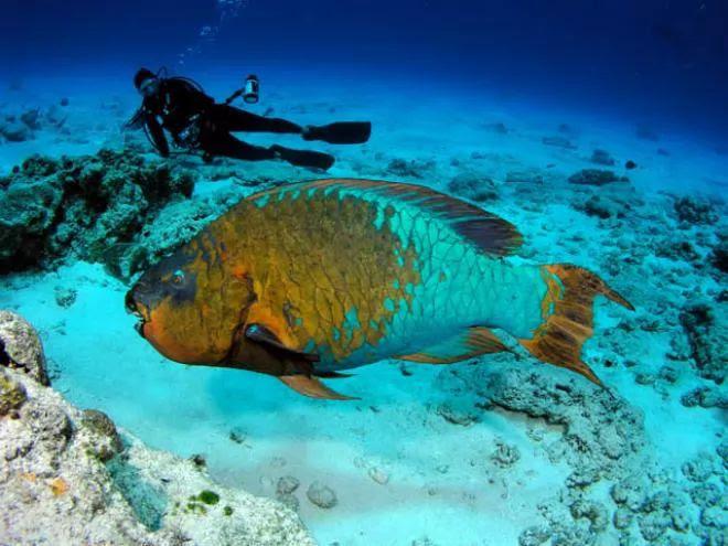 10. Rainbow Parrot Fish
