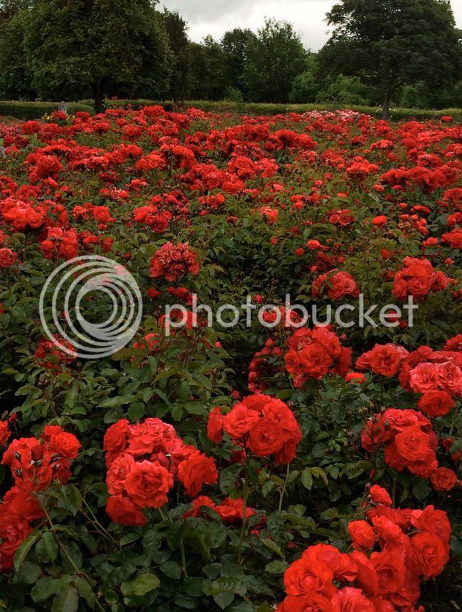 Tralee Rose Garden Ireland