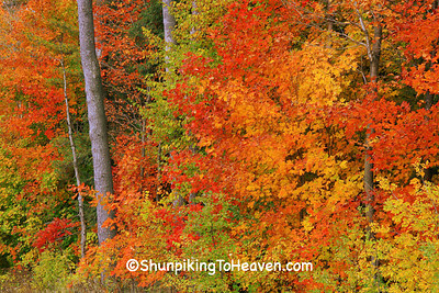 Fall Color, Shawano County, Wisconsin