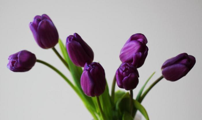 Сиреневые тюльпаны значение
