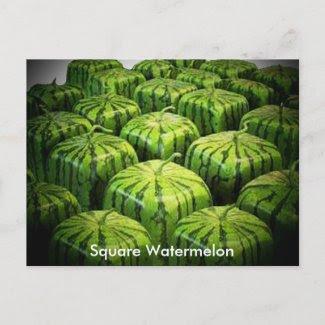 Square Watermelon postcard