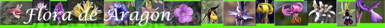 Flora  de  Aragón