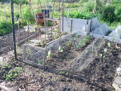 Beans and Brassicas