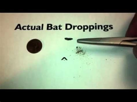 How to identify a bat problem   YouTube