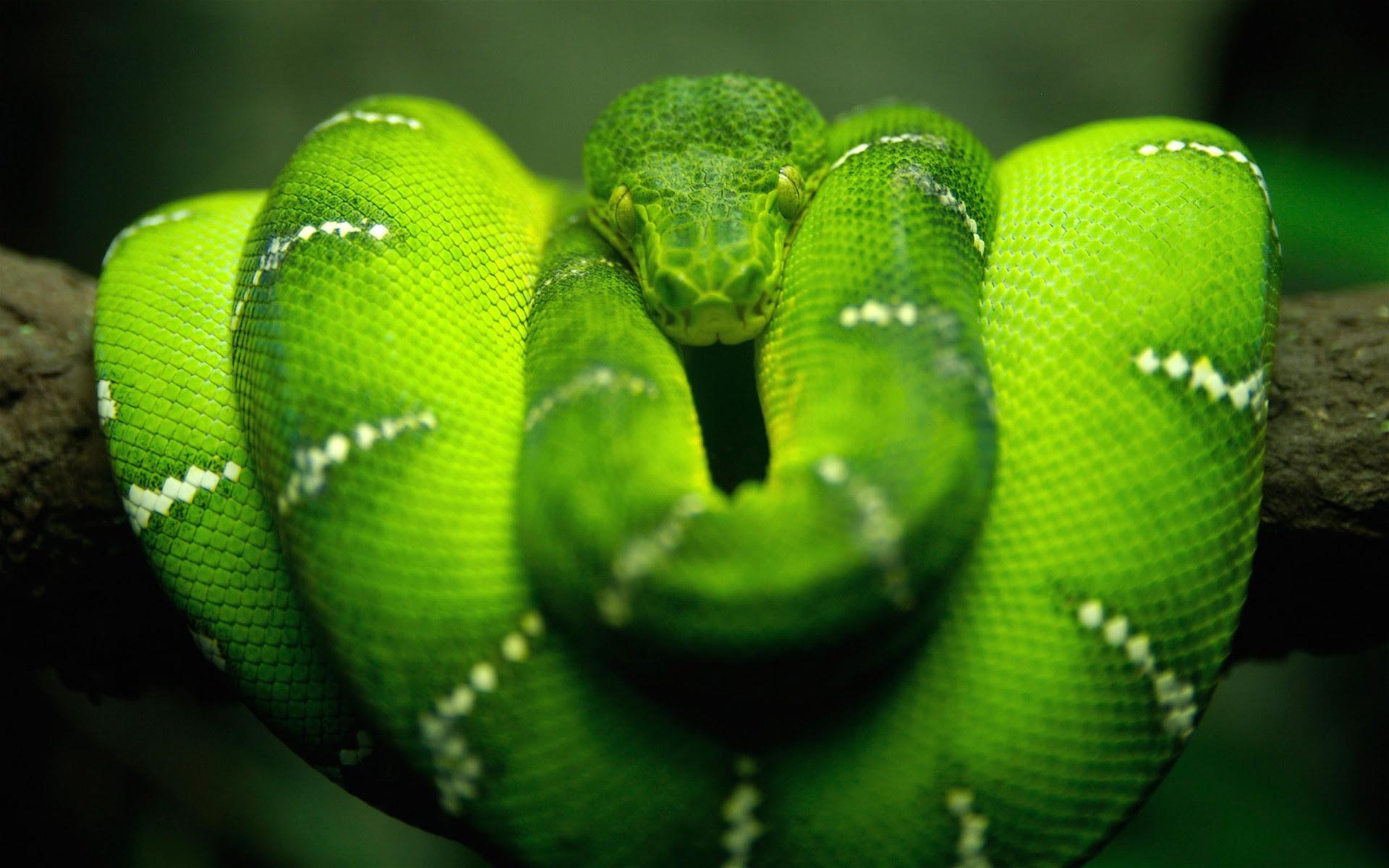 Tree Snake HD Wallpapers | HD Wallpapers | ID #1046