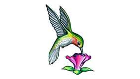 Significado Tatuaje Colibrí 1 Tatuarteorg