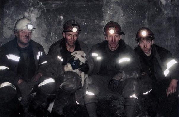 История собаки ,которая помогала шахтерам. Заслуживает уважения Первомайская шахтв, шахтеры