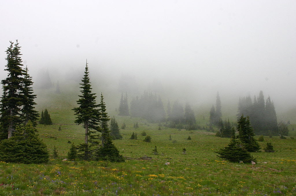 http://upload.wikimedia.org/wikipedia/commons/thumb/a/ae/Mist_Covering_a_Meadow_under_Forest_Encroachment.jpg/1024px-Mist_Covering_a_Meadow_under_Forest_Encroachment.jpg