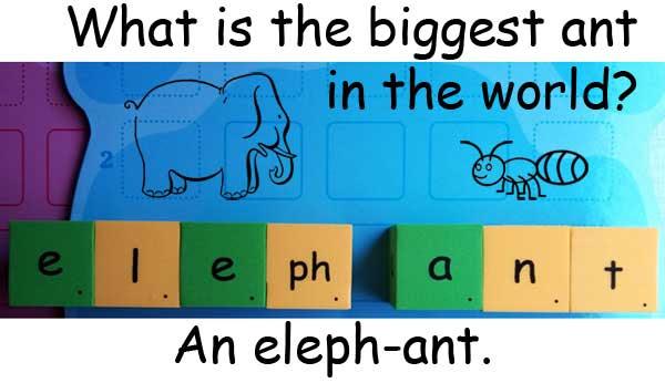 ant 螞蟻 elephant 大象