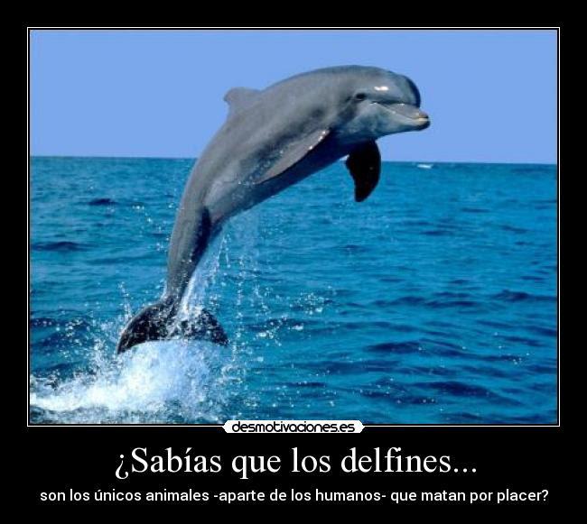 Sabias Que Los Delfines Desmotivaciones