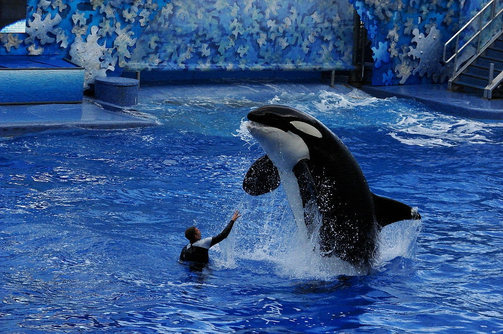 orca-man.
