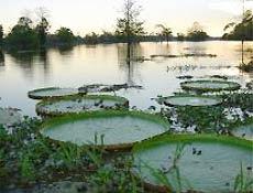 Plano prevê que uma grande área da Amazônia passaria a ser administrada por um consórcio
