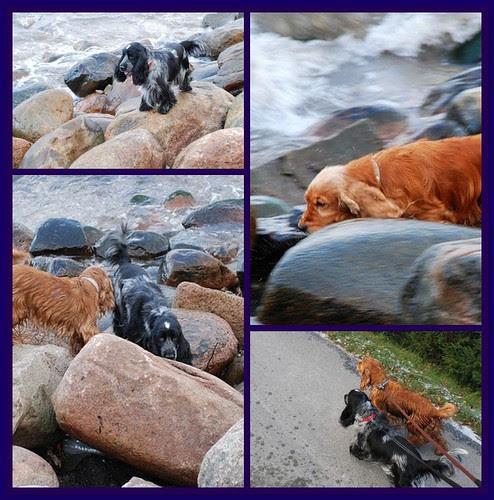 Seadogs