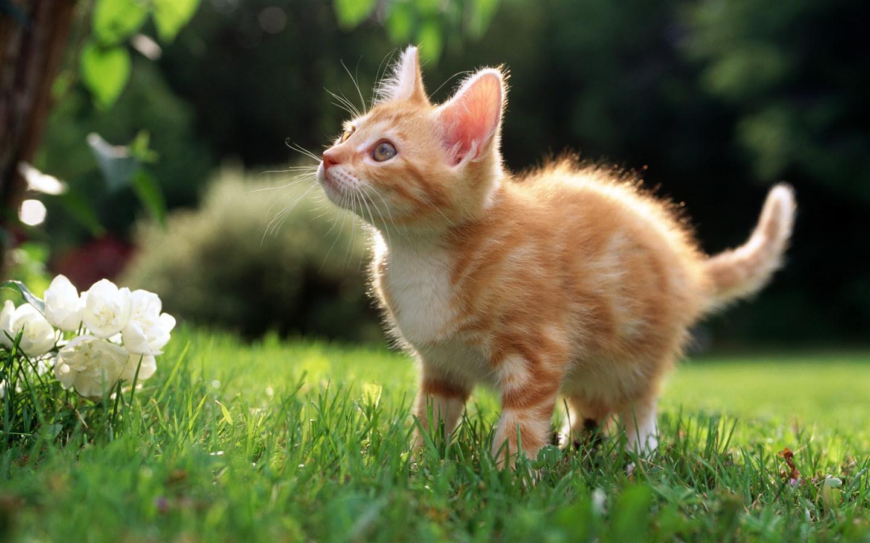 Hdの壁紙かわいい猫の写真 39 1440x900 壁紙ダウンロード Hdの