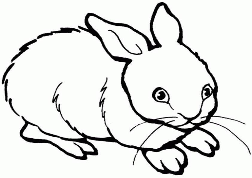 Ausmalbilder Kaninchen 1 Ausmalbilder Tiere