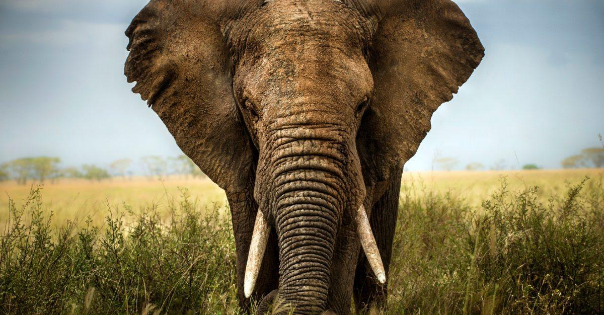 Significados De Los Elefantes