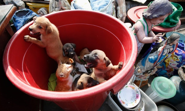 A slum dweller's pets, including puppies and a cat, look on from a plastic container next to religious statues and other belongings, after a squatter colony was demolished in Tondo, Manila, Philippines.