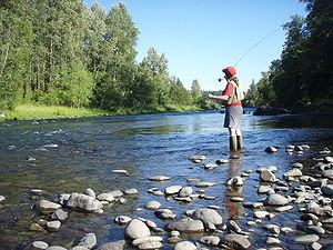 English: Fly fishing on the South Santiam rive...