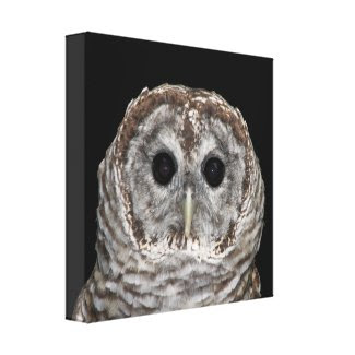 Barred Owl Wrapped Canvas Print wrappedcanvas