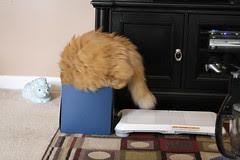Jasper getting in the box