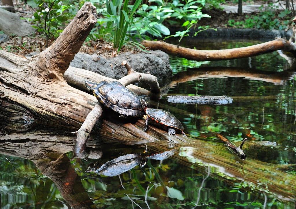 Painted Turtles 2