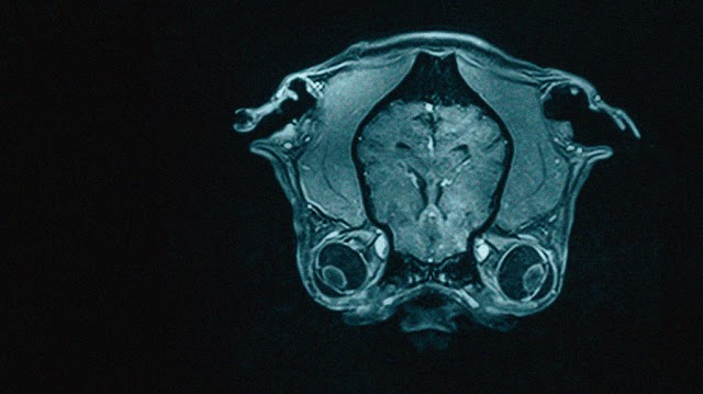 Other mammals' brains are efficient more than human brain