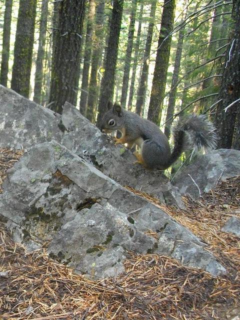 doug squirrel