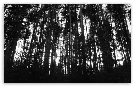 Black White Trees 4k Hd Desktop Wallpaper For 4k Ultra Hd Tv