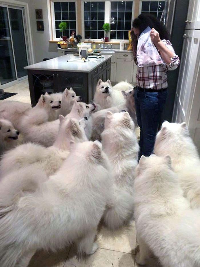 C'est Trick or Treat chaque nuit quand vous possédez un chien
